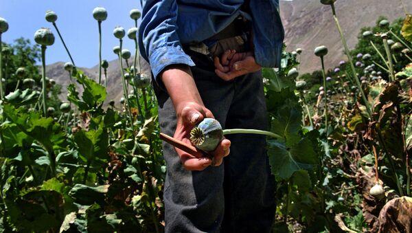 NATO mission fails to cripple opium trade in Afghanistan: expert - Sputnik International
