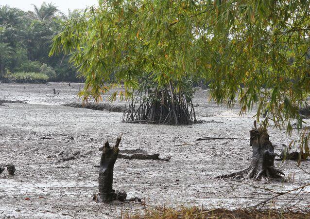 Oil spill at Goi Creek, Nigeria, August 2010.