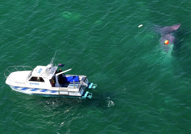 A police boat circles a crashed plane in Lake Taupo in New Zealand Wednesday, Jan. 7, 2015