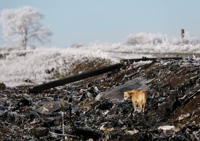 A dog stands at the site where MH17, a Malaysia Airlines Boeing 777 plane, crashed near the village of Hrabove (Grabovo) in Donetsk region