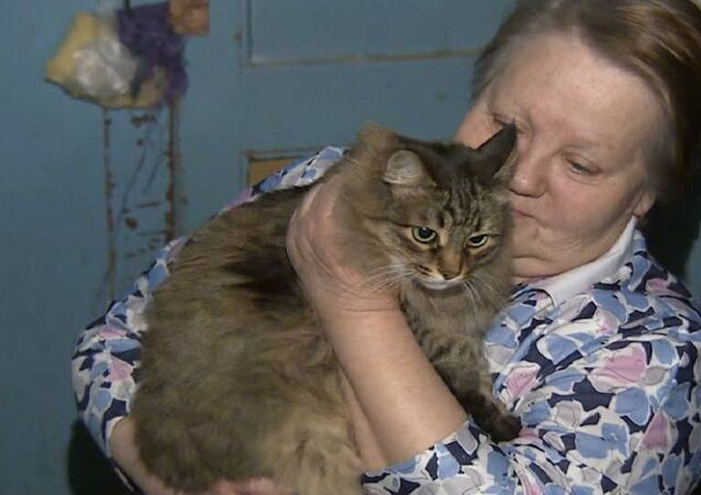 A cat living in an apartment block stairwell came to international attention after helping to save the life of an abandoned baby.