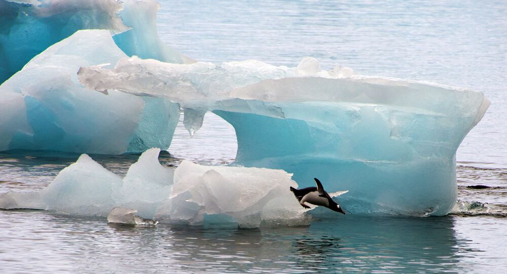 A penguin dives from an ice block