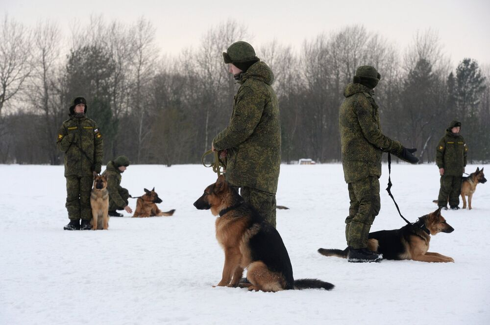 Unique Look at the Dog Training Center of Russian Military