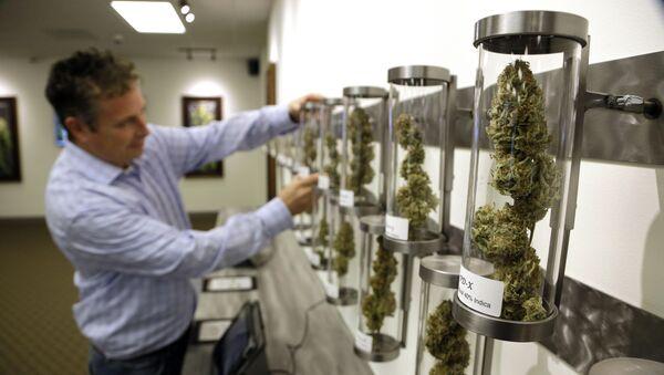 Shane McKee, co-founder of Shango Premium Cannabis medical marijuana dispensary, pulls a sample from their display of cannabis flowers in Portland, Oregon. - Sputnik International