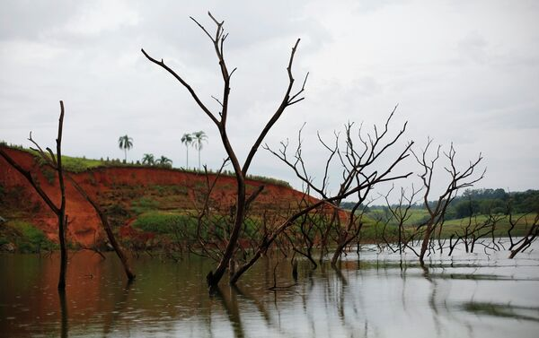 Trees rising out of the Jaguari reservoir, next to the re-emerging old city of Igarata, Sao Paulo State, February 4, 2015 - Sputnik International