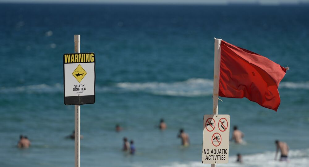 Swimmers are seen in the water despite shark warning signs posted on the beach in the northern New South Wales city of Newcastle on January 17, 2015