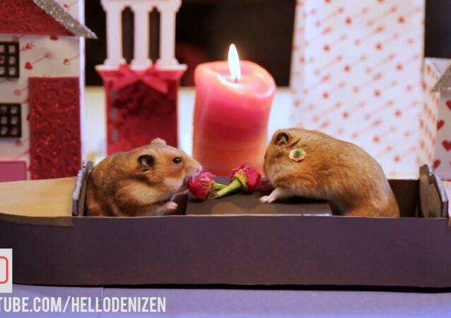 Cuteness Overload: Hamsters Celebrate St. Valentine's Day