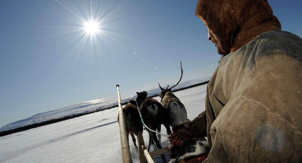 Reindeer Herdsman's Day in village of Lovozero