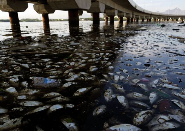 Dead fish and trash float in the polluted Guanabara Bay in Rio de Janeiro, Brazil.