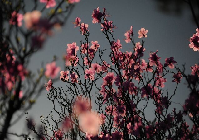 Spring in Transbaikal