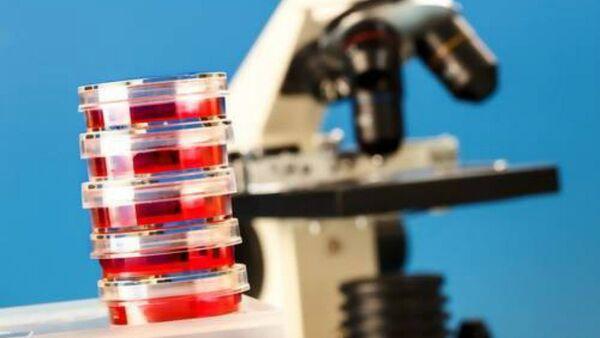 Petri dishes and laboratory microscope - Sputnik International
