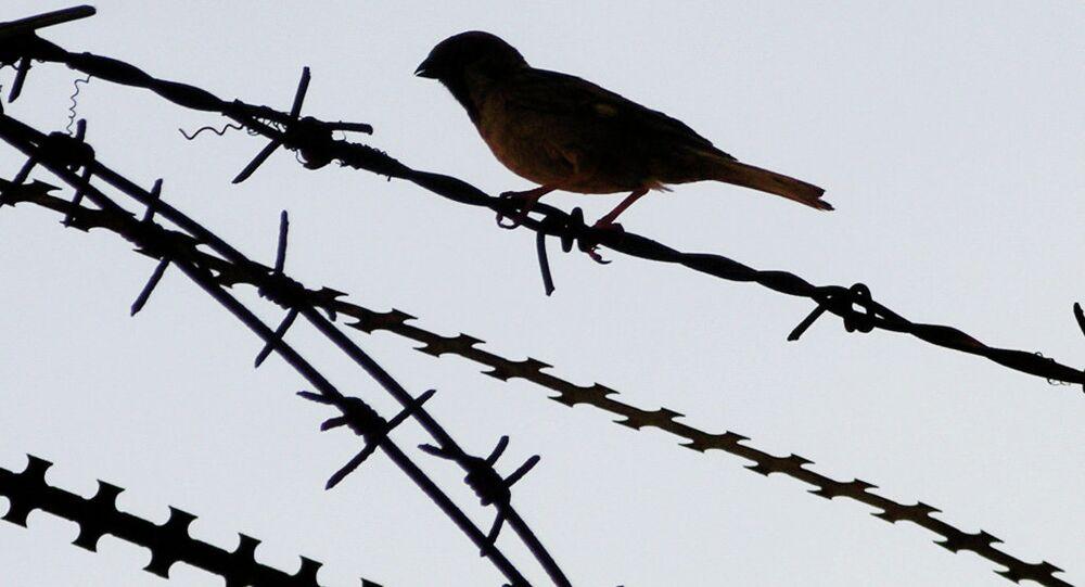 Barbed wire bird