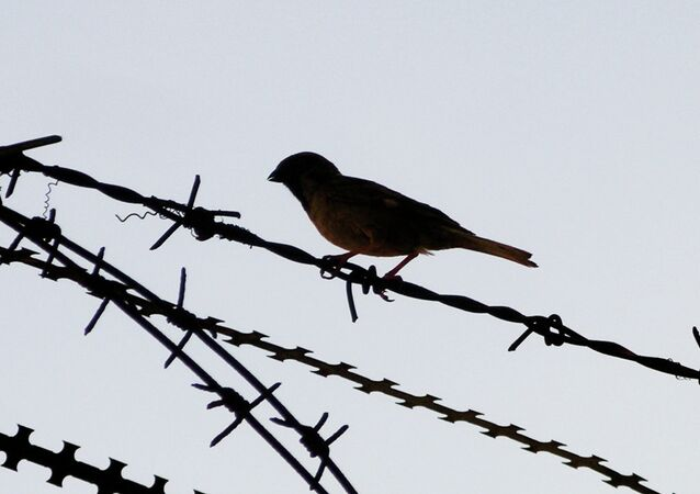 Bird on a barbed wire