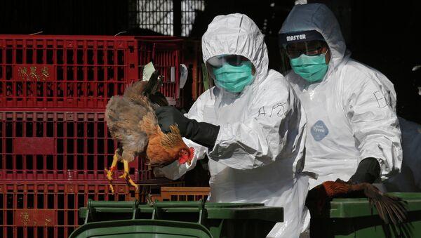 Health Workers Dispose of Chickens Because of Bird Flu Outbreak - Sputnik International