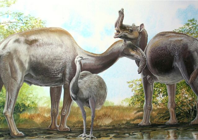 An artist's rendering shows the South American native ungulate Macrauchenia patachonica which had a number of remarkable adaptations, including the positioning of its nostrils high on its head in this illustration released on March 17, 2015