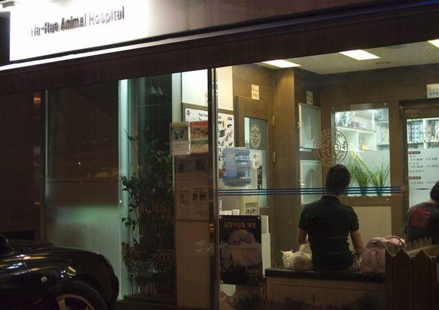 Animal Hospital (one of many),  Seoul,   South Korea