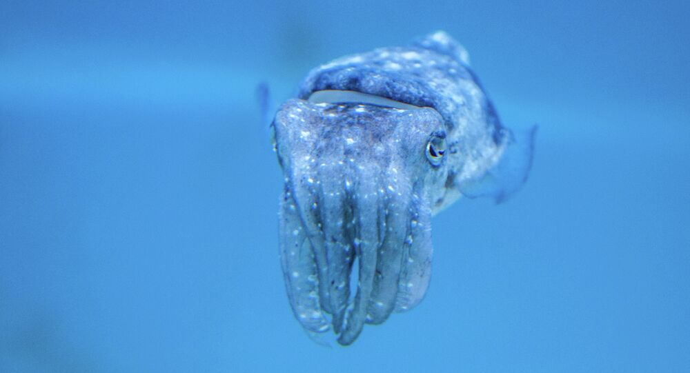 American scientists have created a special duct tape based on the protein of squid