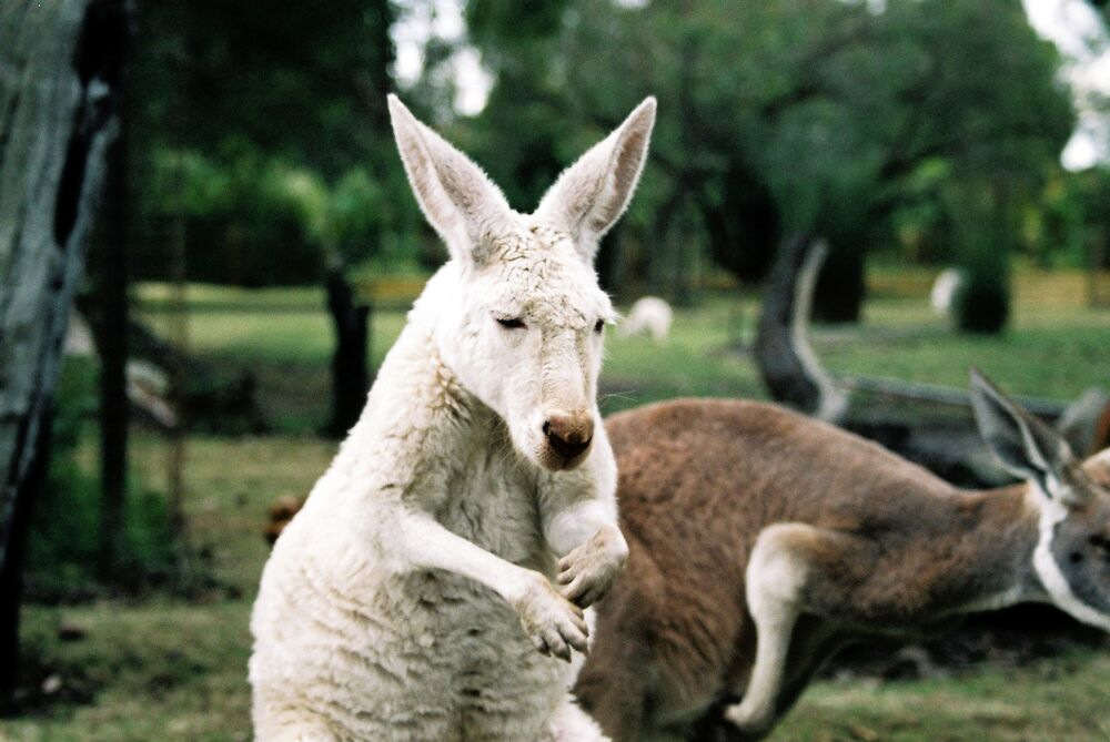 Albino Animals: How to Stand Out From the Crowd