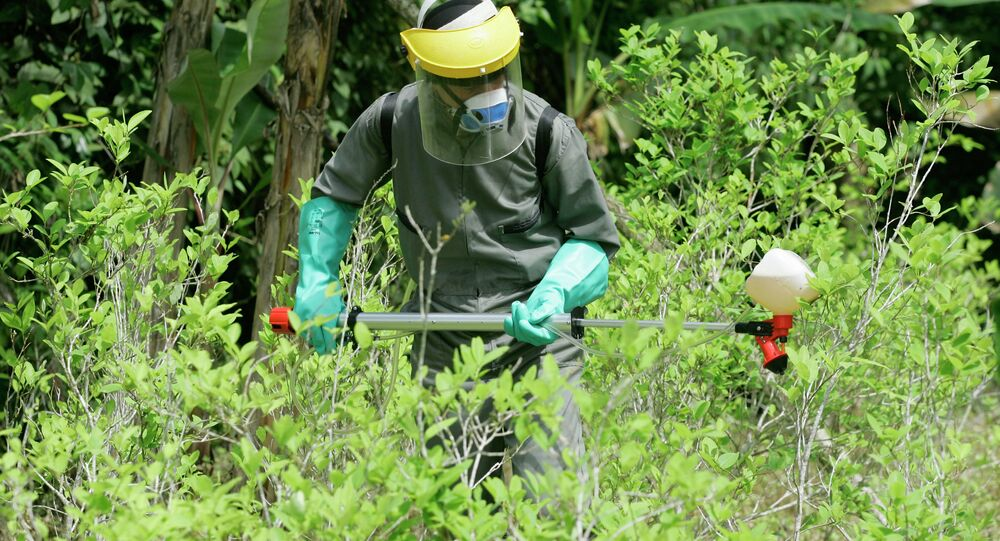 A counter-narcotics police officer sprays herbicide over a coca plant during a campaign to eradicate coca crops in La Espriella, southern Colombia.