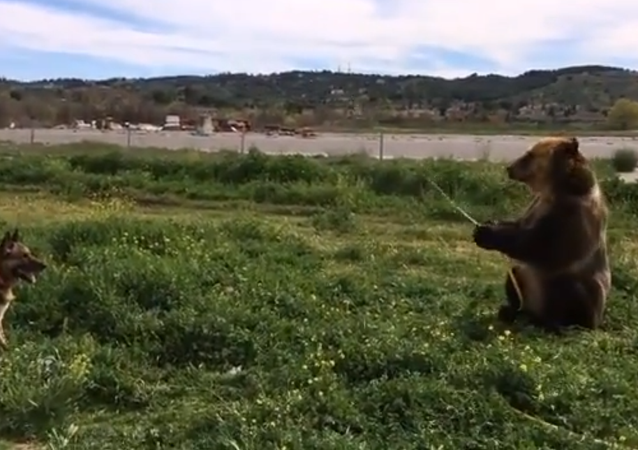 Spanish Garden Party: Bear Sprinkles Dog With Water Hose
