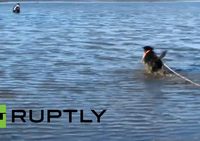 Offering a Helping Paw: Dog Saves Hunter From Waist-Deep Mud