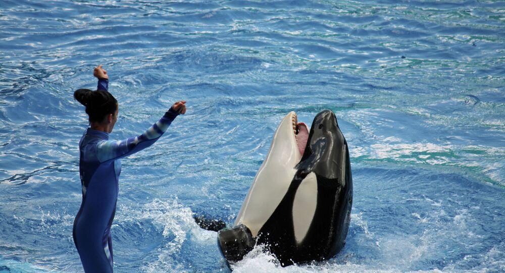 Killer whale show at Sea World's Shamu Stadium in Orlando, Florida