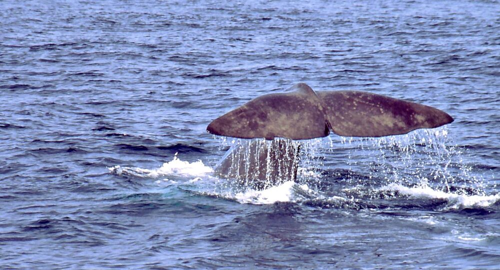 Whale in the Antarctic