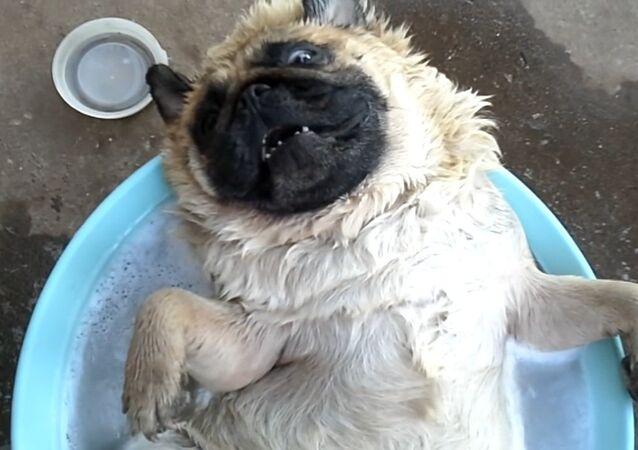 Dog Enjoys Water Time