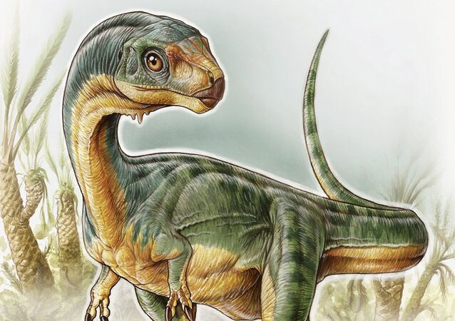 An artist's depiction shows the Chilesaurus diegosuarezi in this undated handout illustration provided by the University of Birmingham in Birmingham, Alabama on April 27, 2015