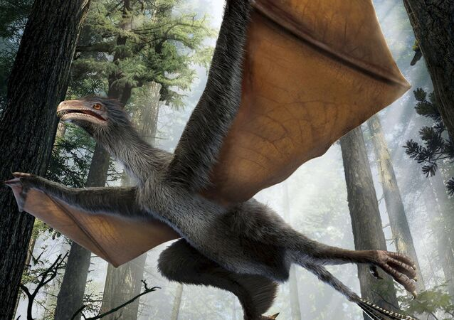 An artist's depiction of the Yi qi dinosaur is seen in this undated handout illustration provided by Dinostar Co. Ltd on April 29, 2015
