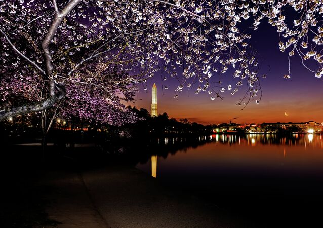 Cherry Washington Monument