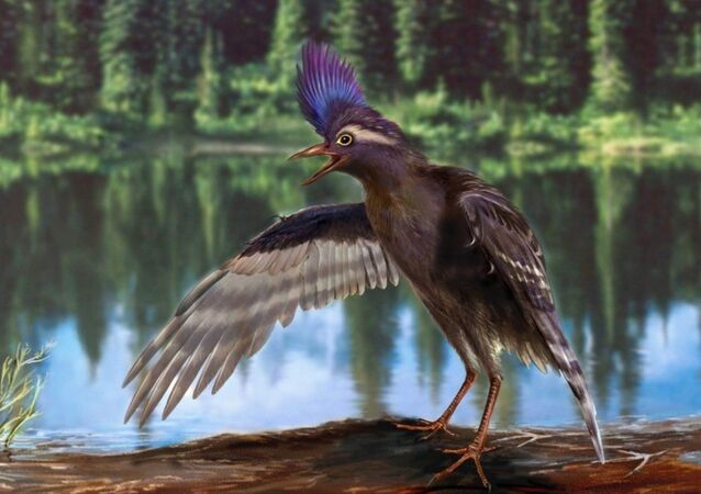 A reconstruction of the oldest ornithuromorph, Archaeornithura meemannae, a specialized wading bird from the Early Cretaceous of China