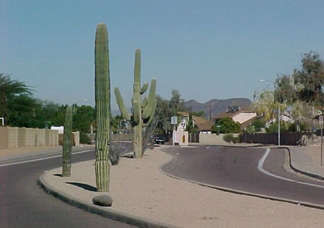 Arizona Town Secretly Installs Plate  Scanning Cameras in Fake Cactuses