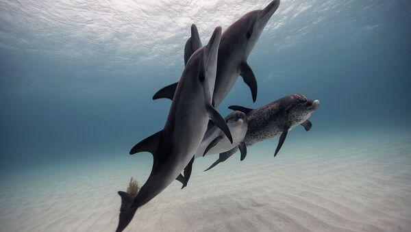 Underwater Photography - Sputnik International