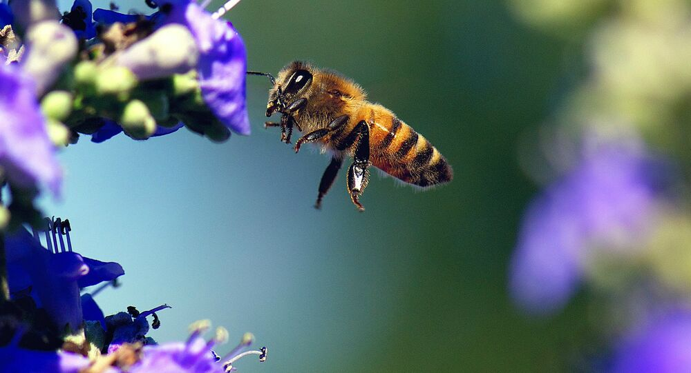 Environmental regulators in the US have proposed the creation of pesticide-free zones on a temporary basis to protect commercial honeybees, which continue to suffer from alarming mass die-offs.