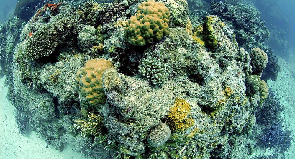 Great Barrier Reef, Australia, Pacific Ocean