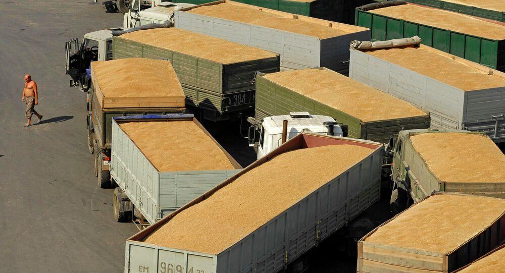 Grain terminal in the port of Novorossiysk
