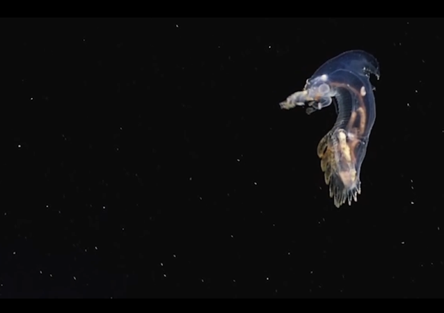 Unknown Alien-Like Creatures Caught on Camera in the Atlantic
