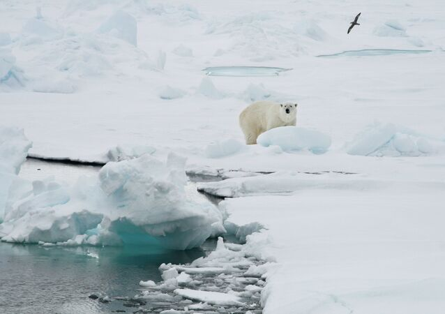 A polar bear stands on an ice floe near the Norwegian archipelago of Svalbard. File photo