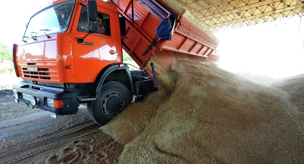 Grain harvesting in the Rostov region