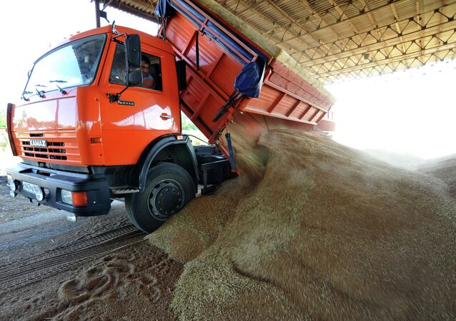 Grain harvesting in the Rostov region