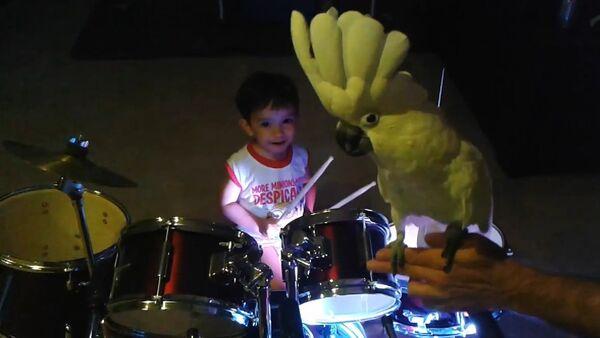 Singing Cockatoo bird jams with baby drummer - Sputnik International
