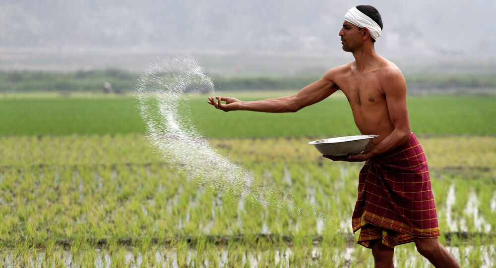 An Indian farmer sprays fertilizer at his paddy field in Burha Mayong about 45 kilometers (28 miles) east of Gauhati, India