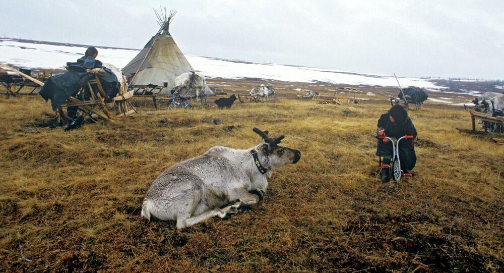 Reindeer breeders' camping ground