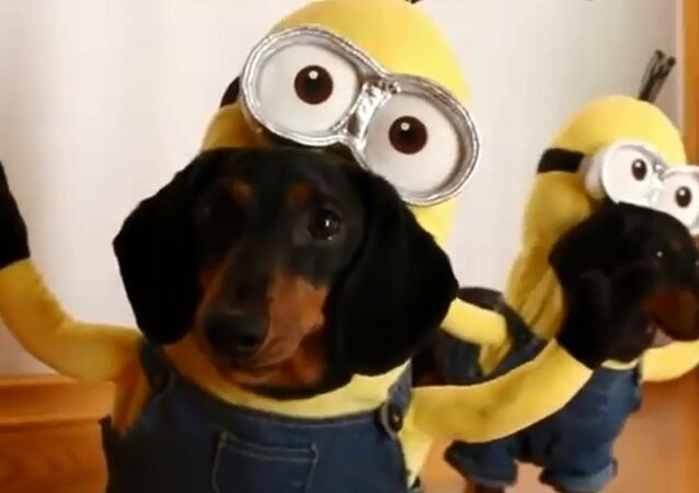 Dog Minions Are a Thing