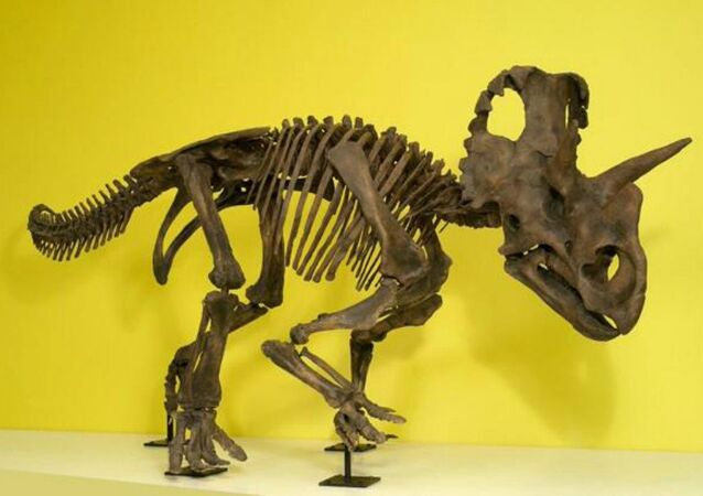 New dinosaur gets official name in honor of female paleontologist