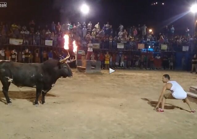 Don't Mess with the Flaming-horns Bull