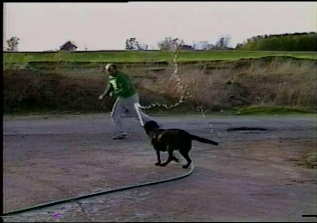 Dog Steals Hose and Sprays Owner