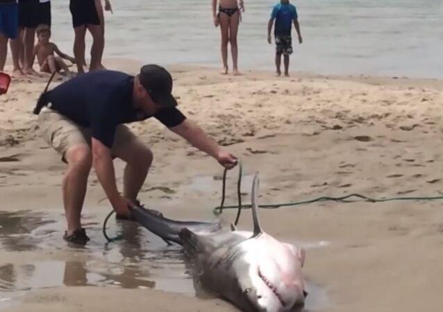 Beachgoers Rescue Stranded Shark