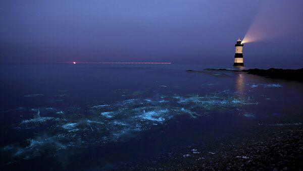 Bioluminescent plankton - Sputnik International